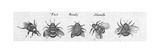 Multiple Winged Insects in Black and White Prints