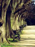 Wonderful Dream - Tree Avenue Landscape Digitálně vytištěná reprodukce