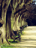 Tree Avenue Landscape Prints by  Wonderful Dream