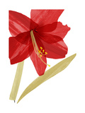 Close-Up of Large Red Hibiscus Premium Giclee Print