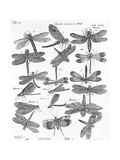 Black and White Winged Insect Chart Prints