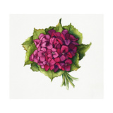 Bouquet of Pink Hydrangeas Surrounded by Leaves Poster