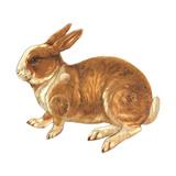 Realistic Rabbit Illustration Stretched Canvas Print