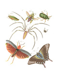 Winged Insects and Beetles Illustrations Print