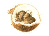 Two Baby Mice in Coconut Shell Prints