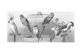 Gray Scale Parrots with Bird Cage Posters