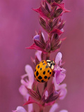 Purple Flower With Ladybug Art by  Wonderful Dream