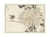 Chrysanthemum with Bird on Stem Illustration Posters