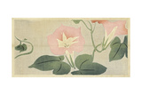 Pink Morning Glories with Stylized Leaves Prints