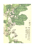 Purple Flowers on Green Stem with Asian Writing Prints