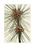 Pine Tree Needles and Curly Pinecones Art