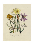 Daffodils, Lilies, and Other Flowers Premium Giclee Print