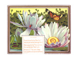 Insects with Water Lilies Affiches