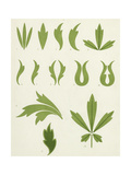Graphic Leaf Variations Art