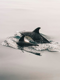 Family Dolphin Sealife Prints by  Wonderful Dream