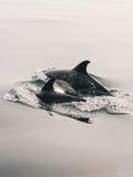 Family Dolphin Sealife Prints by  Wonderful Dream