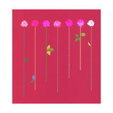 Pink Roses on Long Straight Stem with Leaves Prints