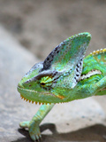 Exotic Reptile Animal 2 Print by  Wonderful Dream