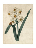 White Daffodils on Green Stem with Butterfly Premium Giclee Print