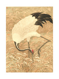 Crane Searching Through Tall Grasses with Tip of Beak Prints