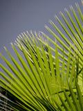 Beach Style Palm Leaf Prints by  Wonderful Dream