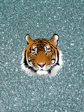 Glitter Sparkley With Tiger Prints by  Wonderful Dream