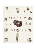 Shellfish and Seashell Scientific Illustrations Prints
