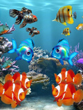 Aquarium Fish Style Posters by  Wonderful Dream