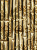 Asia Bamboo Nature Posters by  Wonderful Dream