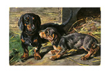Two Dachshunds Sitting on Straw Prints