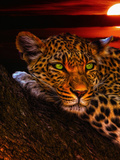 Gepard Leopard Sunset Animal Cat Prints by  Wonderful Dream