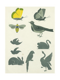 Graphic Winged Insects and Birds Posters