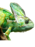 Exotic Reptile Animal Prints by  Wonderful Dream