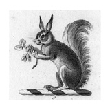 Stylized Squirrel Holding Leaves Prints