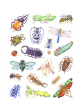 Array of Insects, Including Beetles, Grasshoppers, and Caterpillars Prints