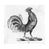 Stylized Rooster Illustration Posters