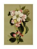 White Flower with Pink Buds and Green Leaves Prints
