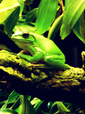 Green Wildlife Frog Animal Art by  Wonderful Dream