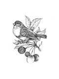 Line Drawing of Bird on Branch with Leaves and Berries Posters