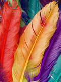 Colorful Bird Feather Prints by  Wonderful Dream