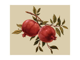 Branch with Two Pomegranates Art
