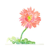 Pink Watercolor Gerbera Daisy on Curved Stem Print