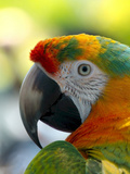 Colorful Bird Parrot Animal Poster by  Wonderful Dream