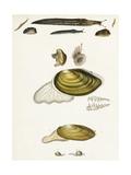 Slugs and Clam Shell Scientific Illustrations Reprodukcje