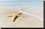 Star Fish Line of Surf Impressão em tela esticada por Mary Lou Johnson