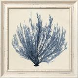 Coastal Seaweed III Prints by  Vision Studio