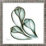 Sea Shells in Green II Prints by Albert Koetsier