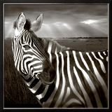 Black & White of Zebra and Plain, Kenya Framed Photographic Print by Joanne Williams