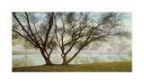 Silhouetts In Fog Giclee Print by Loren Soderberg