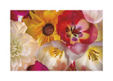 When Flowers Talk Giclee Print by Harold Davis
